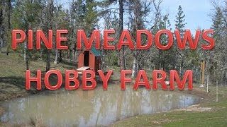 Pine Meadows Hobby Farm - A Modern Small Homestead