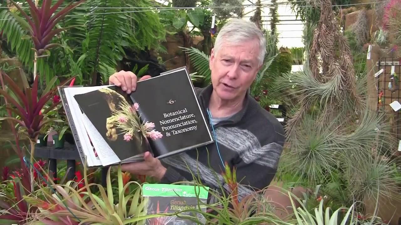 Paul Isley Rainforest Flora Tilly Talks Various Blooming