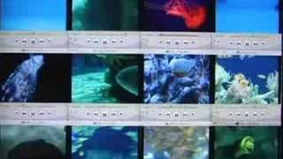 """Kelley Polar -""""Entropy Reigns"""" (remix)"""