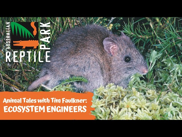 ANIMAL TALES WITH TIM FAULKNER | EPISODE 24 | ECOSYSTEM ENGINEERS