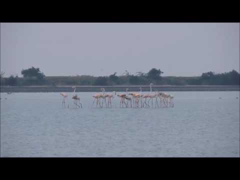 kodiyakarai   Point Calimer Wildlife and Bird Sanctuary