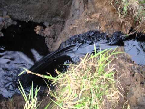 La Contaminación Ambiental Y El Derrame De Petróleo