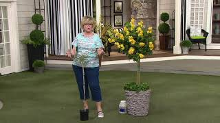 Cottage Farms 1-Piece Honeycomb Butterfly Bush Patio Tree on QVC