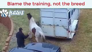 Питбуль набросился на лошадь, но она отреагировала