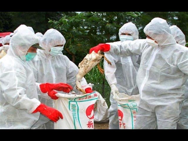 Deadly strain of bird flu confirmed in Odisha