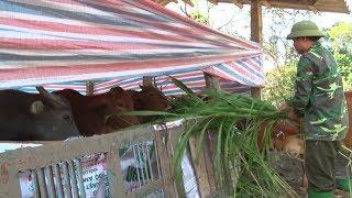 Tuyên Quang chủ động phòng, chống đói rét cho vật nuôi