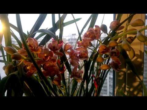 Орхидея: как часто поливать, как ухаживать? Орхидеи в