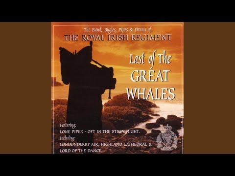 Walrus / Scarce O' Tatties / Flee The Glen / Terror Time / Molly Connell / Swallowtail Coat /...