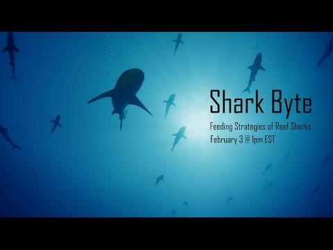 Shark Byte! Feeding Strategies of Reef Sharks