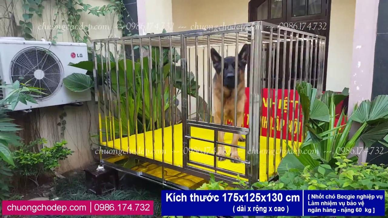 Chuồng Chó Inox | Chuồng Nhốt Chó Becgie nặng 60 kg  KT 175x125x130cm