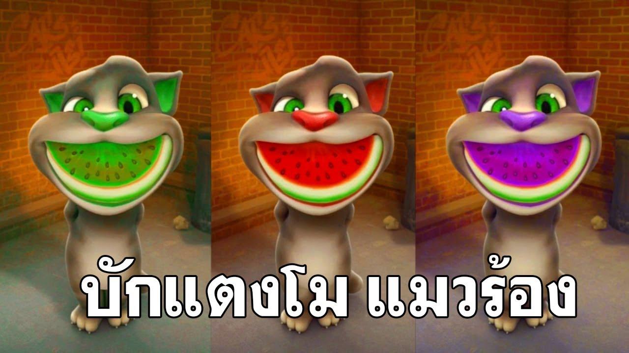 บักแตงโม วงฮันแนว แมวร้อง ตลกอย่างฮ่า