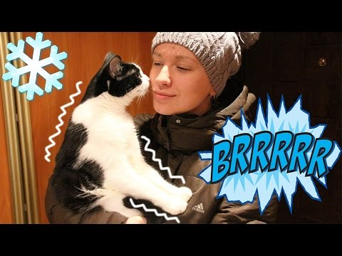 BRRR !! Сat funny reaction to the nose touching the cold