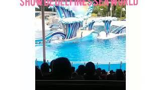 Show de delfines sea world orlando florida 2018