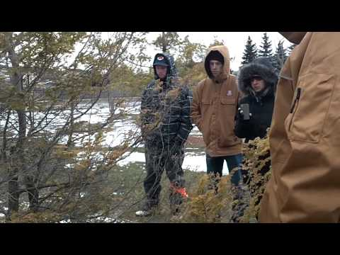 Tsuga canadensis (Canada Hemlock)