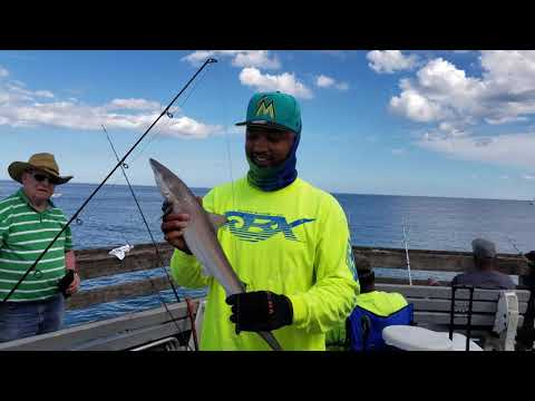 Virginia Beach Fishing Pier (Giant Ray, Blacktip Shark And More)