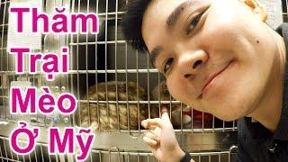Thăm Trại Mèo Cực Dễ Thương Ở Mỹ - Cuộc Sống Mỹ 75