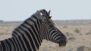 Camper Rundreise Namibia 2015