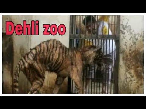 Delhi zoo (national zoological park)