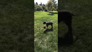 Billy playing ball