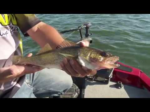 Walleye Fishing Stockton Lake Is No Secret Anymore