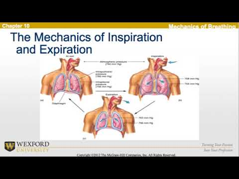 Respiration During Exercise | Personal Trainer Exam Review