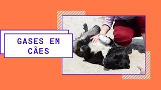 Idiopática cães em neuropática dor