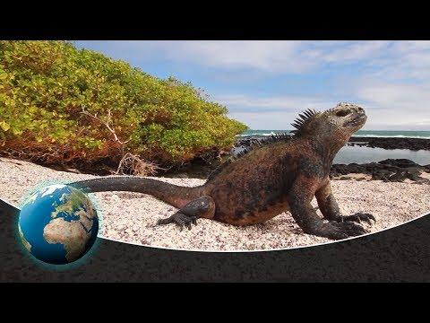 From Ecuador to Galápagos