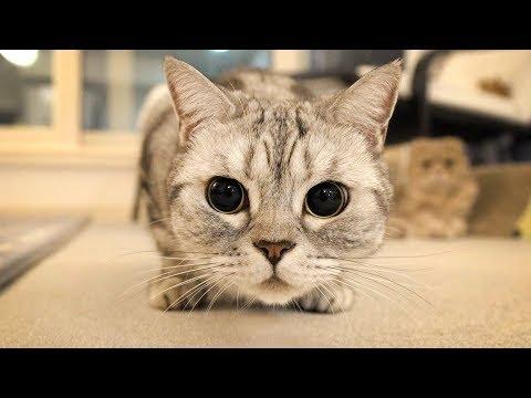 수리노을 고양이들 동공확장 시키기Dilating the Pupils of the SuriNoel Cats【수리노을 SURI&NOEL】