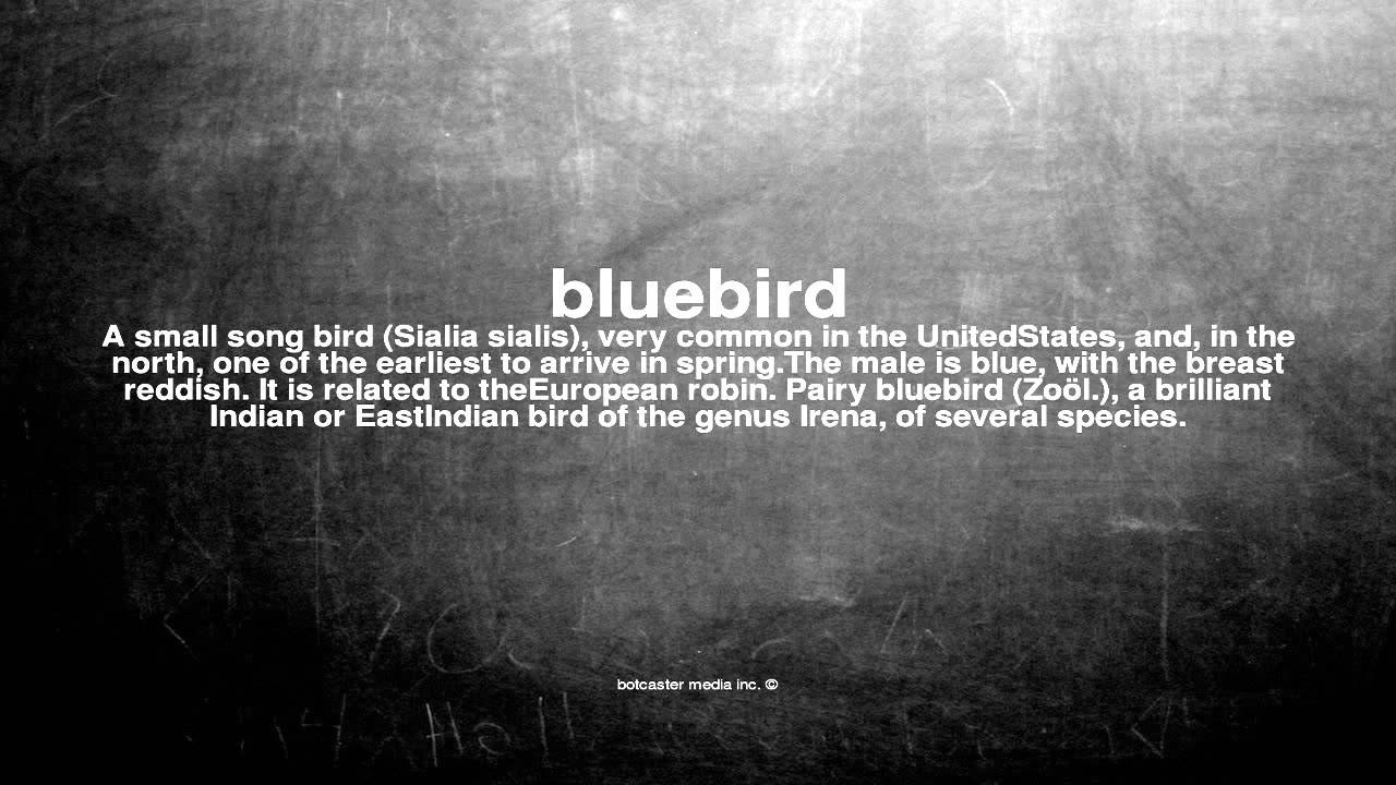 What does bluebird mean youtube what does bluebird mean buycottarizona Images