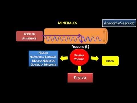 Funcion del cobre en el cuerpo humano yahoo
