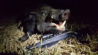 Hog hunting in central California
