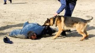 スイス St.Gallen Olmaで行われた警察犬のデモンストレーション オープ...