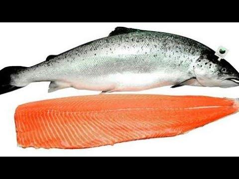 Ikan Salmon Untuk Bayi Mulai Usia Berapa Bayi Alergi Salmon