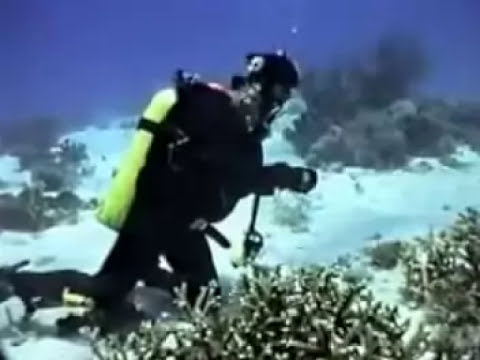 Diving  - Sulu Sea