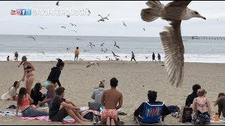 Birds Attack Beach PRANK!!