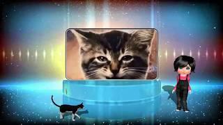 Озорные котятки - стих про котят и красивая песня котят. Котята поют под музыку.