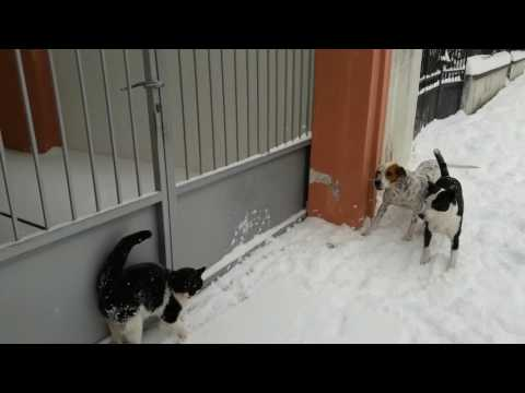 cat vs 2 Dogs