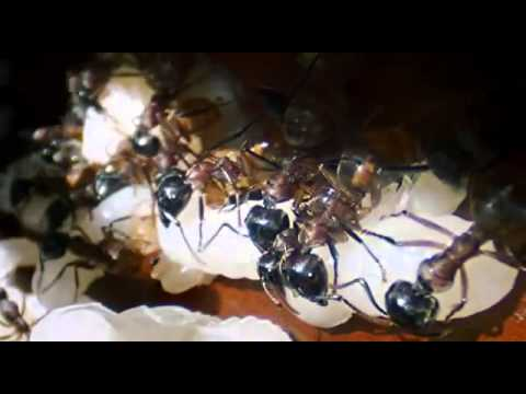Ants: Nature's Secret Power
