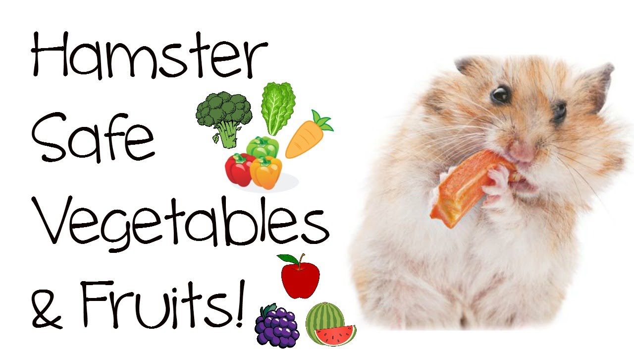 Foods That Syrian Hamsters Can Eat