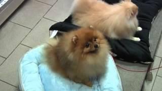 Наши собаки на ТВ