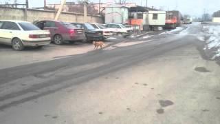 Собака хромает на две лапы.