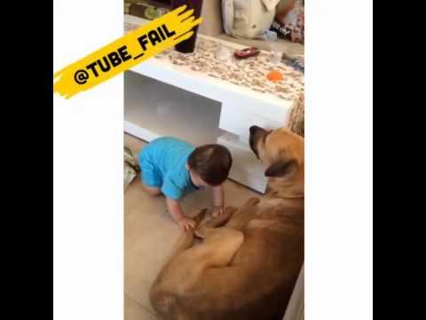 dog bites babys penis