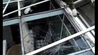 Замена стекла триплекс зимнего сада(Показан процесс замены многослойного стекла триплекс. Компания Re-Stk., 2011-07-01T06:02:40.000Z)