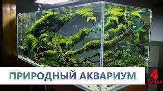 Аквариумные растения. 4 часть. Как высаживать растения. Виды акваскейпов. СО2 плюсы и минусы