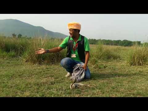 Releasing Most venomous snake indian Cobra then king Cobra snake rescue team Panchet dam (N G O)