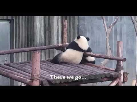 That Stupid Jerk Steve Stole My Bamboo But I Fall Instead XD