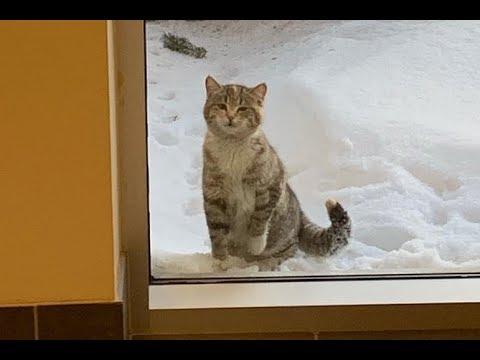 Вопрос: Как тренировать кошку с помощью кликера?