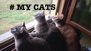 Мои коты / I miei gatti