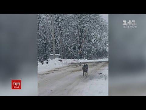Село на Тернопільщині