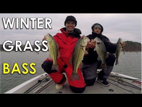 Winter Bass In Offshore Grass On Football Jigs